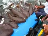Ручные акулы и мега-наглая цапля.